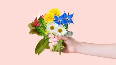 Photo of Communicate Your Love With These 5 Exceptional Flowers
