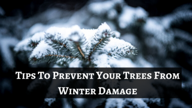 Photo of 5 Tips To Prevent Your Trees From Winter Damage