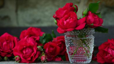Photo of Top 5 Flowers Used to Making Perfumes