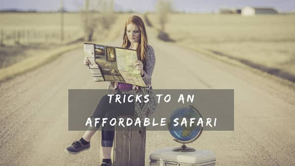 Affordable Safari