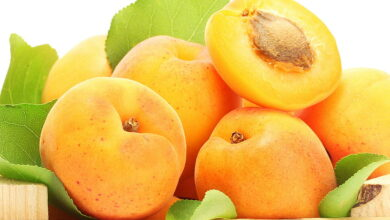 Photo of Apricot Fruit & It's Amazing Benefits