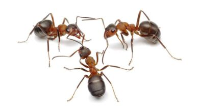 Photo of Ant and Human Life