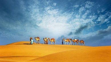 Photo of Amazing Experience of Morning Desert Safari in Dubai