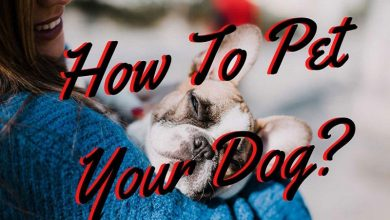 Photo of How To Pet Your Dog? How to do it?