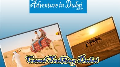 Photo of Enjoy A Camel Trekking Tour In Dubai