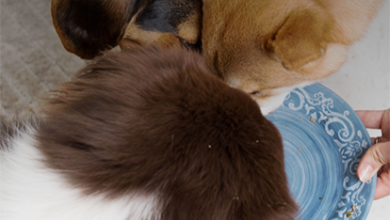 Photo of How to Ensure Your Dog Intakes A Healthy Meal and Supplements?