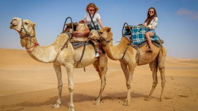 Photo of Enjoy a Memorable Camel Treks in Dubai