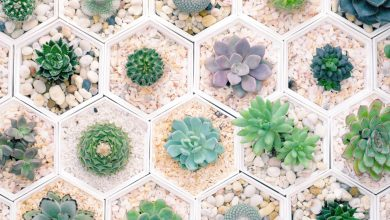 Photo of Health Benefits of Having Succulents & Cacti in Your Home