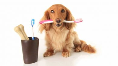 Photo of What Are Dental Wipes for Dogs & Why Do You Need Them?
