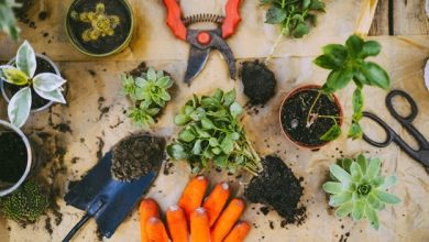 Photo of Handy Gardening Tools for Building an Outstanding Garden