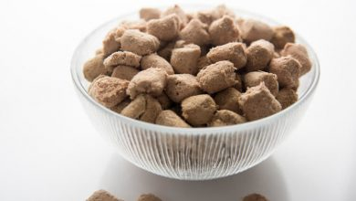 Photo of Where Can You Get the Best Freeze-Dried Dog Food?