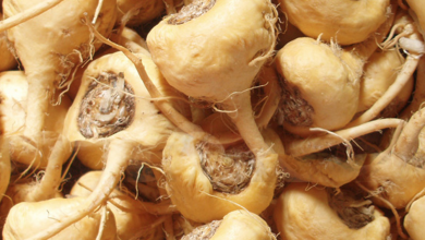 Photo of Is Maca For Fertility Problems Actually Effective?