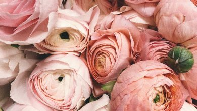 Photo of Upgrade Your Home Beauty Along With These 6 Special Flowers