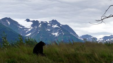 Photo of BEST TOP 12 THINGS TO DO IN ANCHORAGE, (AS) ALASKA AND DAY TRIPS FROM ANCHORAGE