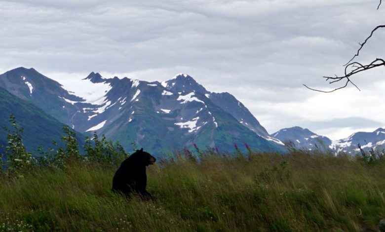 Alaska and day trips from Anchorage
