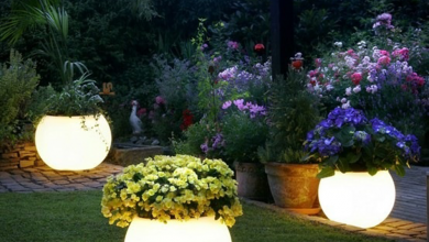Photo of Trendy planters that one can keep at home