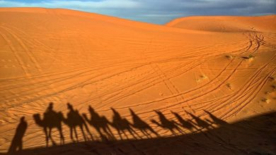 Photo of Top facts about Morocco, top curiosities