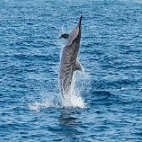 dolphins to rewilding