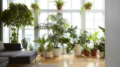 Photo of Purify The Air in Your Home With These Beautiful Ornamental Plants