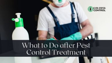Photo of What to Do after Pest Control Treatment