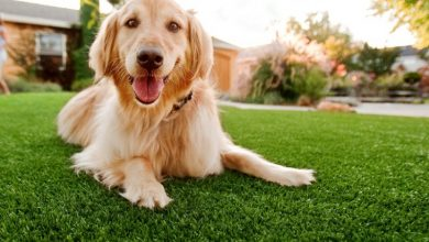 Photo of Essential Benefits of Artificial Grass for Dogs