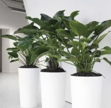 Photo of Dropdown Few Essential Tips For Maintaining The Indoor Office Plants