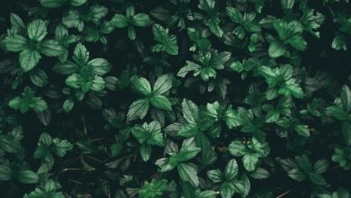 Photo of What is Evergreen Content and How to Use it in Your Content Marketing Strategy