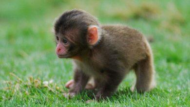 Photo of The Story of  Orphaned Baby Monkey