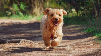 Photo of 10 Best Small Dog Breeds for Limited Space