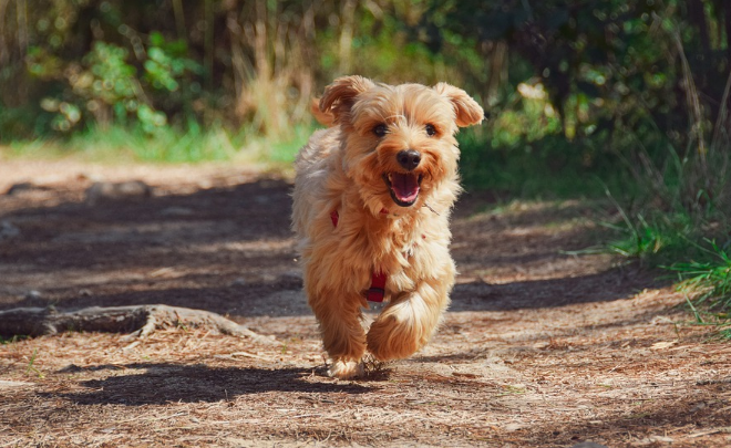 10 Best Small Dog Breeds for Limited Space & Lifestyle