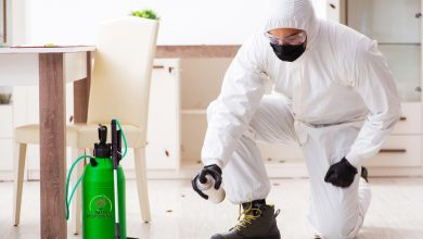 Photo of How to Keep Your Office Free from Pests?