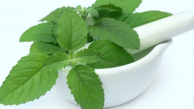 Photo of Tulsi extract drawn from Certified Organic Herbs