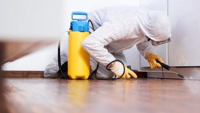 Photo of When the requirement arises for choosing professional pest control?