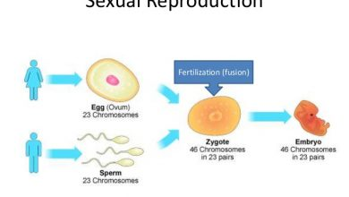 Photo of What Is Sexual Reproduction?